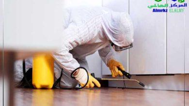 شركة مكافحة حشرات بالرياض أقوى أنواع المبيدات