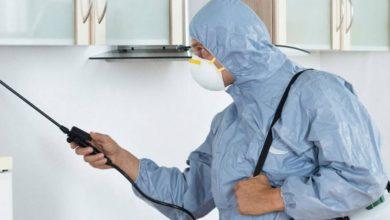 شركة رش المنازل بالمبيدات الحشرية