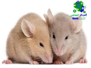 مكافحة الفئران بالرياض وطردها من المنازل