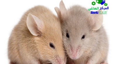 مكافحة الفئران في المزارع, مكافحة الفئران في المزارع, شركة المركز العالمي