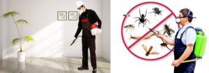 مميزات شركة مكافحة حشرات بالرياض