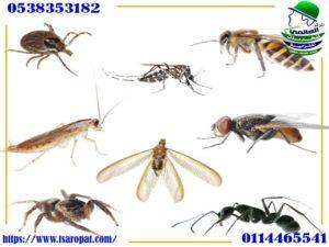أنواع مبيدات الحشرات