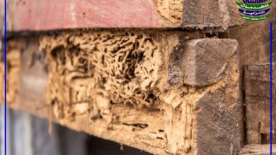 طرق التخلص من النمل الأبيض, مكافحة النمل الأبيض وطرق التخلص من النمل الأبيض, شركة المركز العالمي