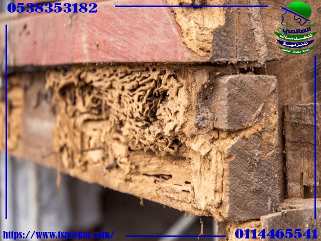القضاء على نمل الخشب