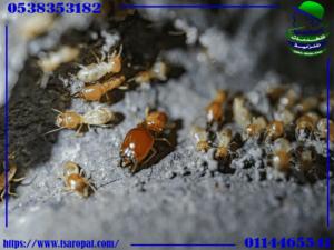 علامات وجود النمل الأبيض بالمنزل