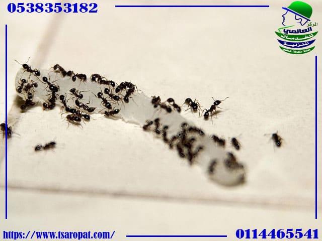 مكافحة النمل في المطبخ