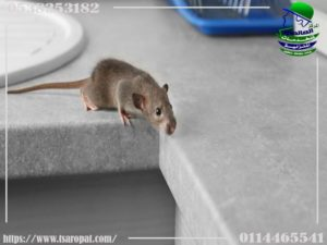 الأشياء التي تطرد الفئران