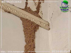 حماية الخشب من النمل الأبيض
