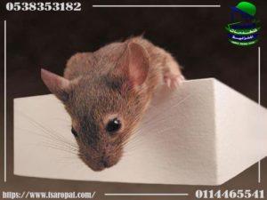 كيفية تعقيم الحلل والاواني بسبب الفئران