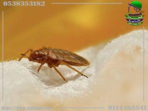 افضل مبيدات بق الفراش